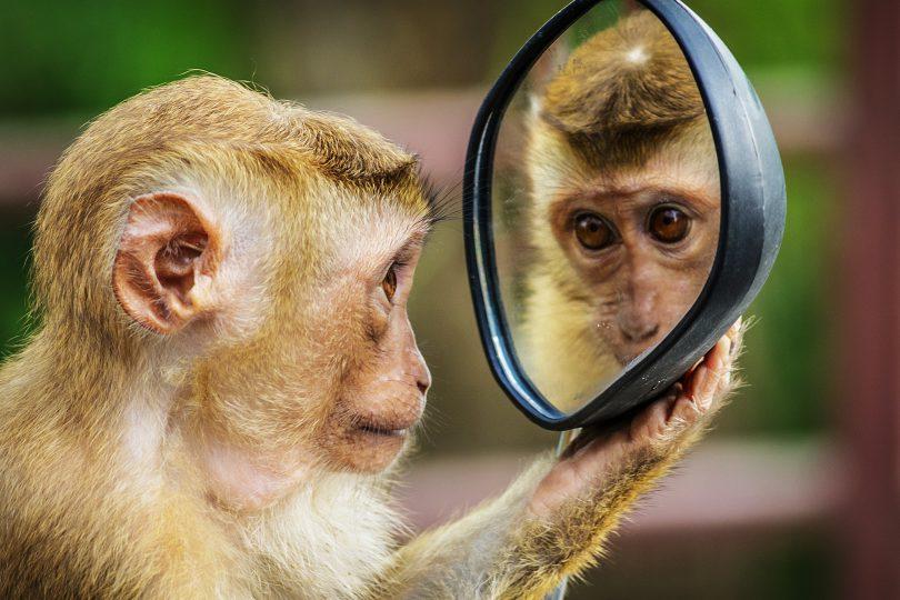 ۱۰+۱ حقیقت درباره پرسشهایی که از خود میپرسیم ــ میمونی که پرسشگرانه، در آینه نگاه میکند